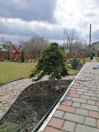 Ландшафтный дизайн, топиар, уход, восстановление