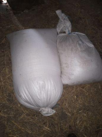 Zamienię 170kg pszenicy na kozy owce
