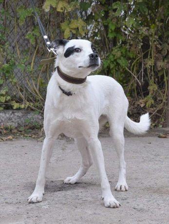 Красотка Бэлла, замечательная собака с чудесным характером