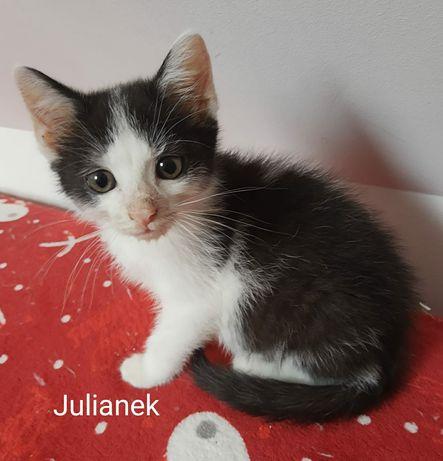 Szczepione kotki do adopcji
