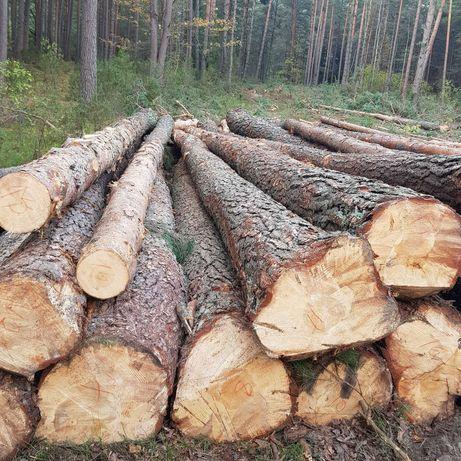 Drewno sosna tartaczna dłużyca
