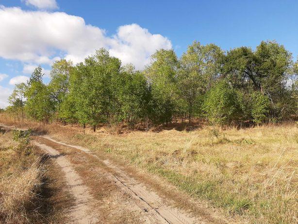 Земельный участок у реки рядом лес