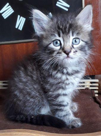 Отдам котиков  возраст 3 месяца.
