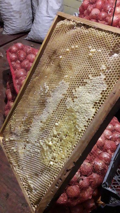 Продам сушь пчелиную 2020года Шостка - изображение 1