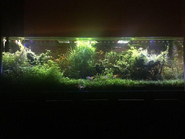 Okazja Nawozy akwarium roślin fosfor rosliny PO4 fosforany