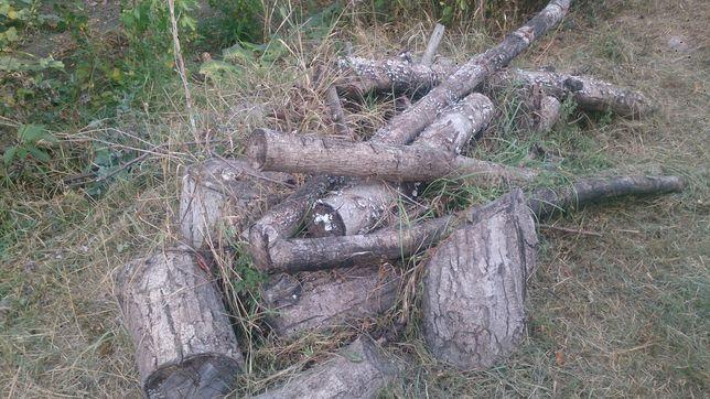Продам дрова орех и шелковица