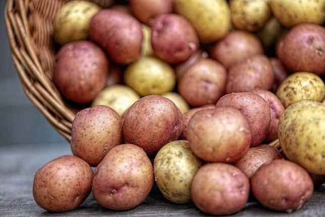 Batatas novas de boa qualidade (Cozer ou Fritar)