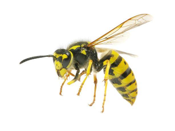 NAJTANIEJ Usuwanie usunięcie OS Szerszeni Pszczół Likwidacja gniazd