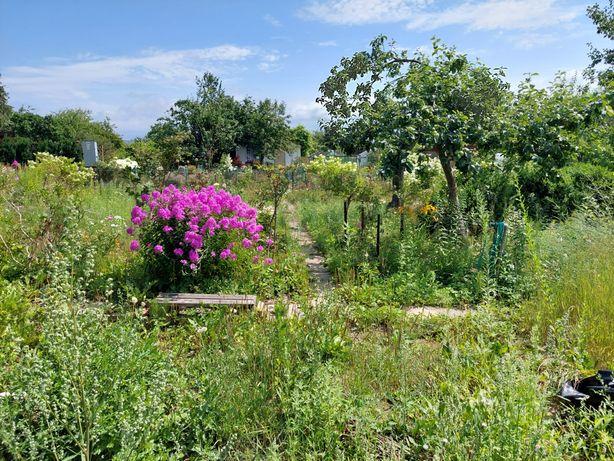 Ogródek dzialkowy Rod