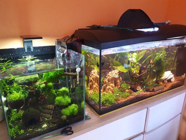Rośliny do akwarium, rybki i krewetki