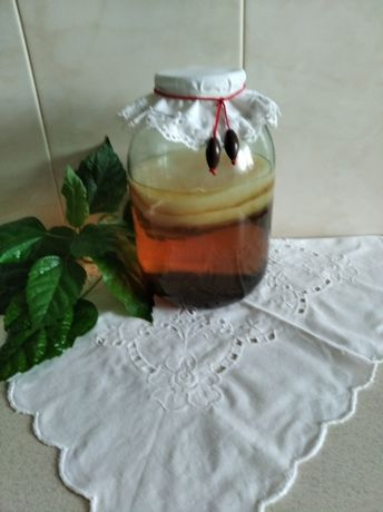 Продам чайный гриб Камбуча