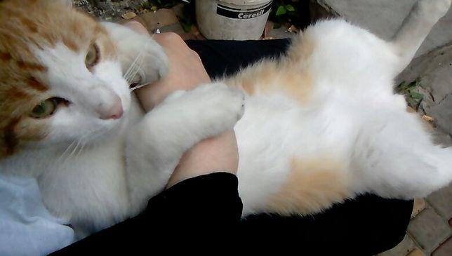 кіт 1 рік