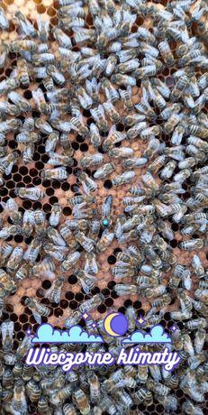 Pszczoly zapraszam