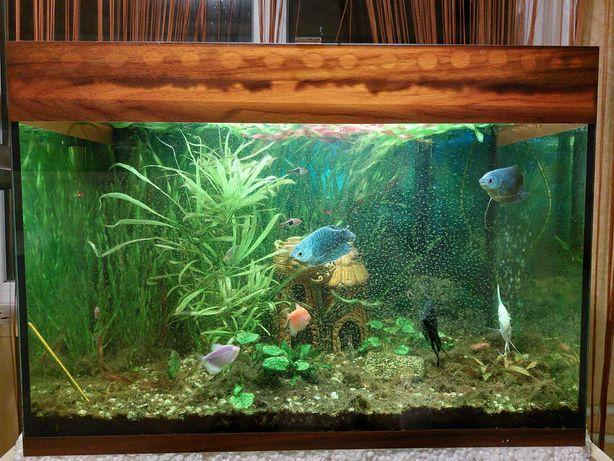 Акваріум (з рибками та обладнанням)