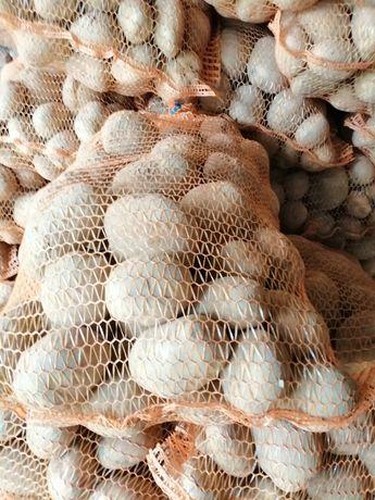 Ziemniaki Vineta