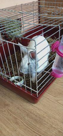 Królik, Klatka dla królika i akcesoria
