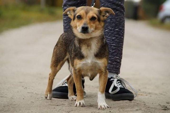 Leika- psia przyjaciółka