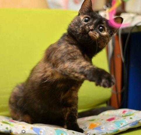Кішка в пошуках домівки 2р