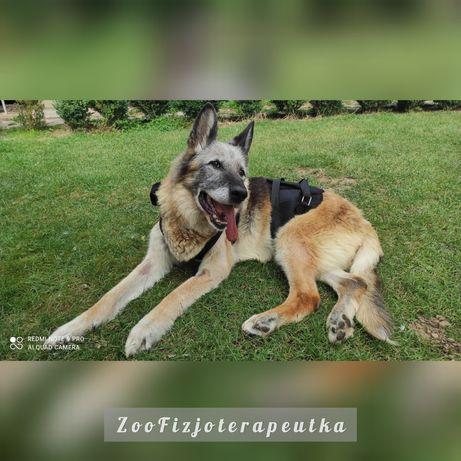 Fizjoterapia zwierząt. Masaż psów i koni. Rehabilitacja zwierząt