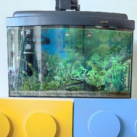 Akwarium panoramiczne 40l z akcesoriami