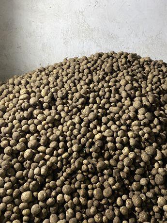 Ziemniaki jadalne Sifra ekologiczne. Mozliwosc dowozu