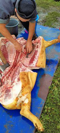 Домашнє м'ясо свиней 85грн/кг