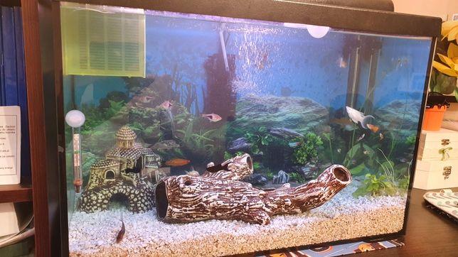 Akwarium 70l używane