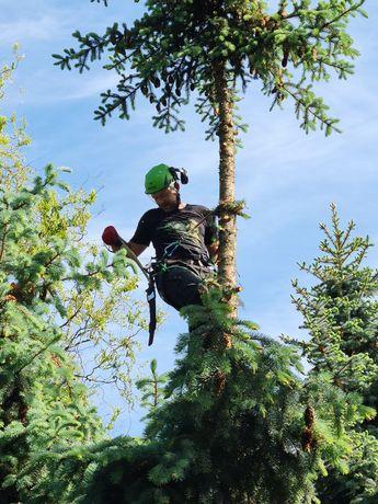 Arborysta wycinka i pielęgnacja drzew, zrębkowanie