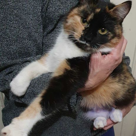 В добрые руки кошка котята котёнок