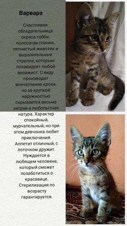 Кошечка Варя ищет дом