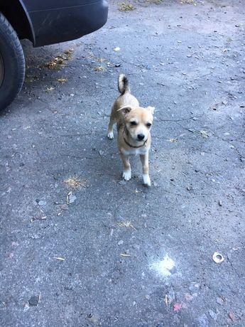 щеночек, девочка 3,5 месяца