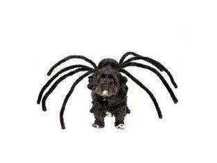 Pająk NOWE przebranie dla psa Halloween