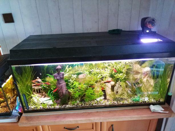 Bardzo ładne porządne  kompletne akwarium 160l