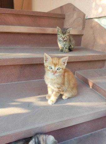 Do oddania trzy  3-miesięczne koty