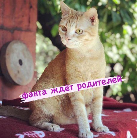 рыжая кошка Фанта ищет дом