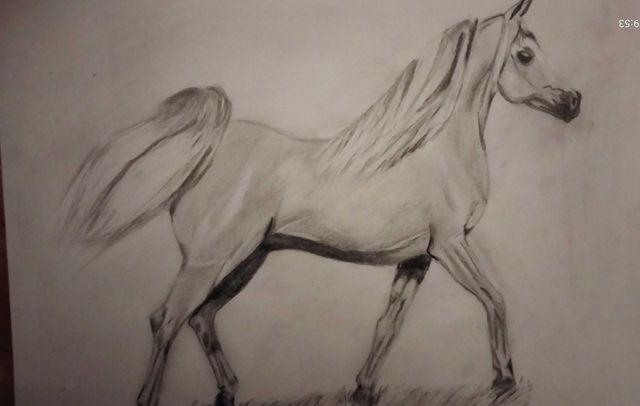 Koń szkic konia, super dekoracja