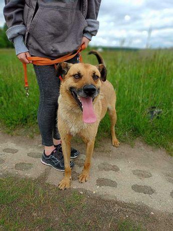 Kostek - skrajnie wychudzony psiak teraz szuka domu