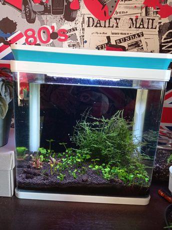 akwarium małe z oświetleniem