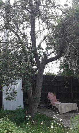 Сухие деревья на дрова отдам даром. Только вместе с ветками