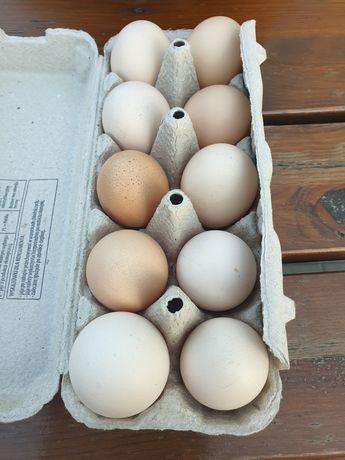 Swojskie jajka z wolnego wybiegu