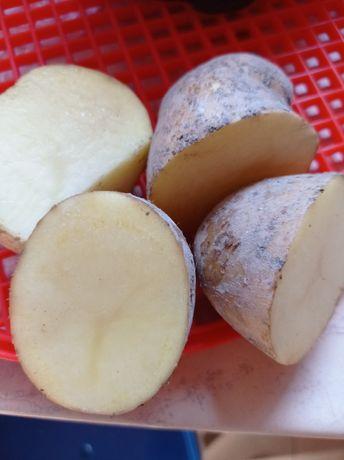 Sprzedam ziemniaki DENAR jadalne i sadzeniaki