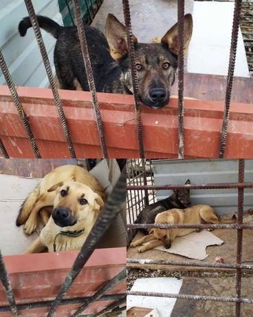 На Стройке Остались 2 Собаки в Вольере