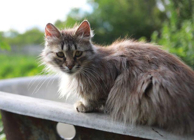 кошка 1 год стерилизована