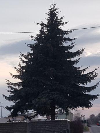 Drzewo za wycinke