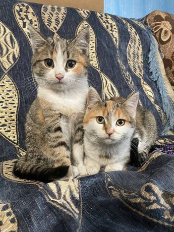 Котики в добрі руки!