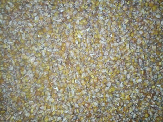 Продам зерно: пшениці, кукурудзи, третікала.