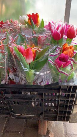 Тюльпан в горшке на 8 марта