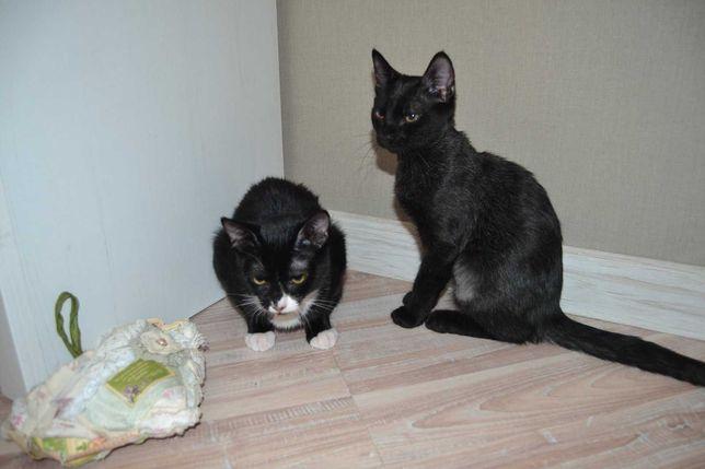 Бархатные котята в добрые руки, 3.5 месяца, квартирные