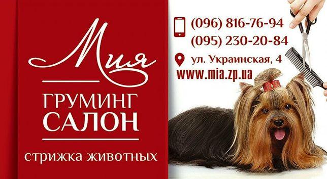 """Стрижка собак и котов в салоне """"Мия"""" Нужны модели для школы груминга!!"""