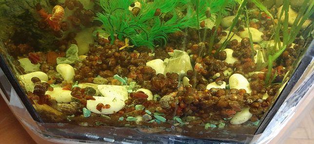 Продам сомиків, равликів в акваріум.